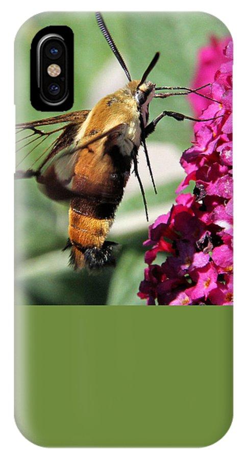 Hummingbird Clearwing Moth IPhone X / XS Case featuring the photograph Hummingbird Clearwing Moth by Doris Potter
