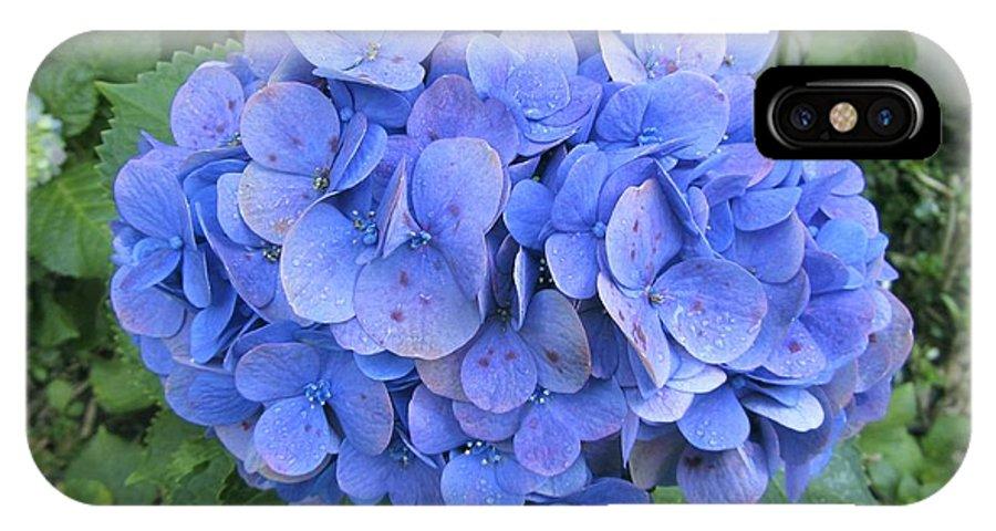 Hydrangea Macrophylla IPhone X / XS Case featuring the photograph Hydrangea Flowerhead by Tony Craddock
