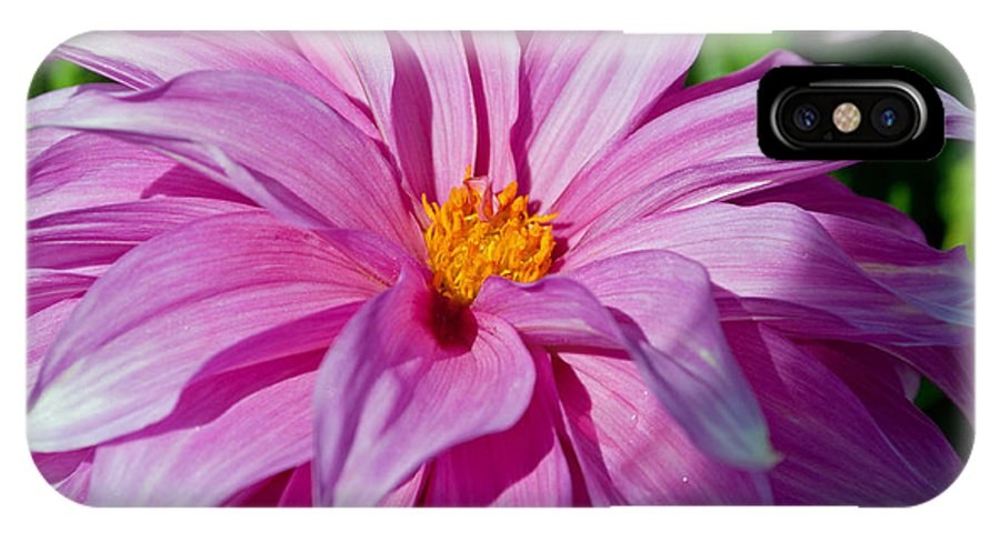 Ice Pink IPhone X Case featuring the photograph Ice Pink Dahlia by Tikvah's Hope