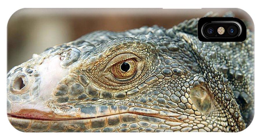 Aggression IPhone X / XS Case featuring the photograph Iguana (iguana Iguana) by Bjorn Svensson