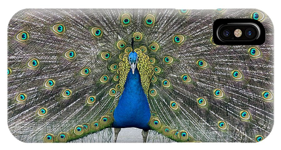 Pavo Cristatus IPhone X / XS Case featuring the photograph Indian Peacock by Denise Swanson