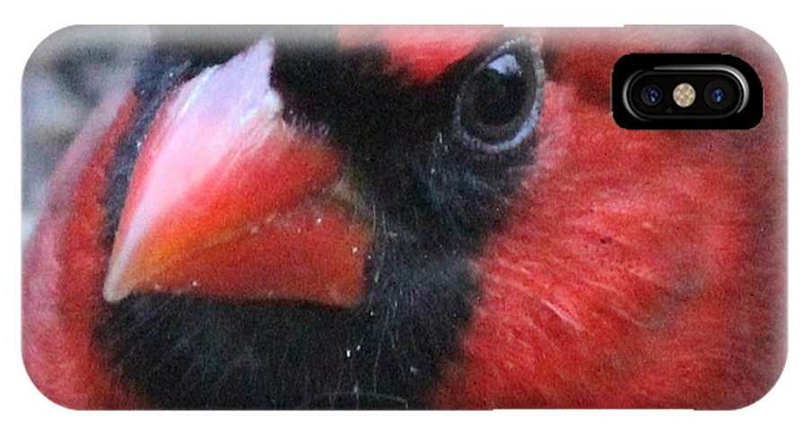 Cardinal IPhone X Case featuring the photograph Intense Cardinal by Theresa Willingham