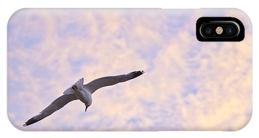 Seagull IPhone X Case featuring the photograph Into The Wind by Priya Ghose