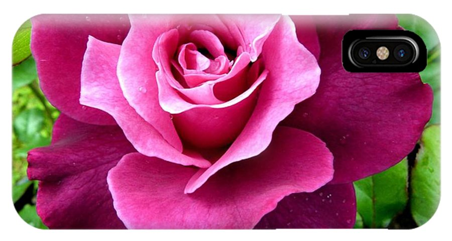Intrigue Rose IPhone X Case featuring the photograph Intrigue Rose by Will Borden