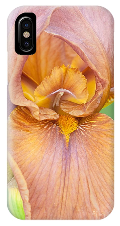 Iris IPhone X Case featuring the photograph Iris In Gold by Regina Geoghan