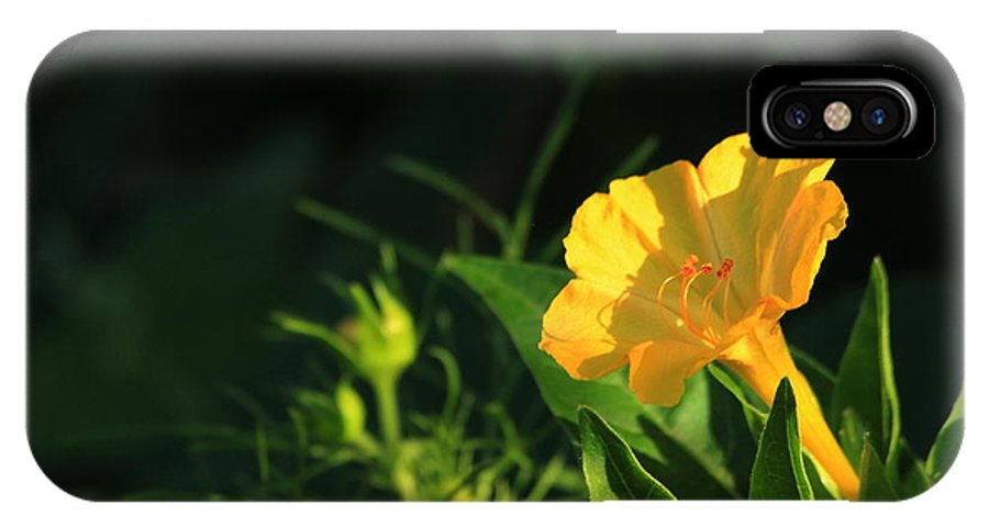 Flower IPhone X Case featuring the photograph Is It Four O'clock Yet by Marjorie Imbeau