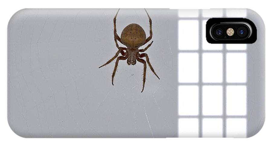 Spider IPhone X / XS Case featuring the photograph Itsy Bitsy Spider by Douglas Barnard