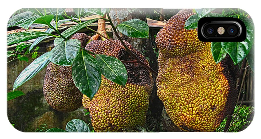 Asia IPhone X Case featuring the photograph Jack Fruit by Mark Sellers