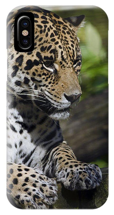 Jaguar IPhone X / XS Case featuring the photograph Jaguar by JT Lewis