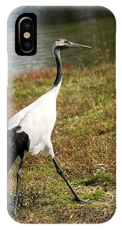 Red-crowned Crane IPhone X Case featuring the photograph Japanese Crane by Bob Gibbons
