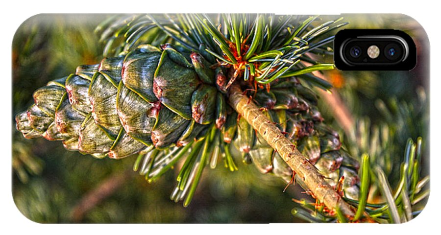 Hdr IPhone X Case featuring the photograph Japanese White Pine by David Bearden