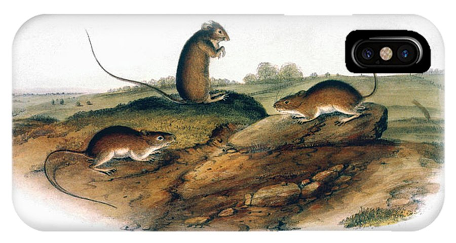1846 IPhone X Case featuring the photograph Jumping Mouse, 1846 by Granger