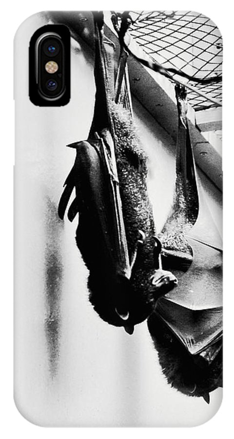 Bat IPhone X / XS Case featuring the photograph Just Hanging Around by Brittany Horton