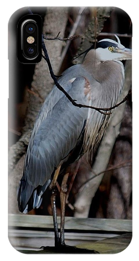 Wildlife IPhone X Case featuring the photograph Just Hiding Out by Larry Krussel