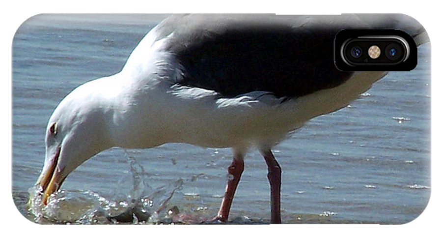 Seagull IPhone X Case featuring the photograph Just Like Chloe by Brian Commerford