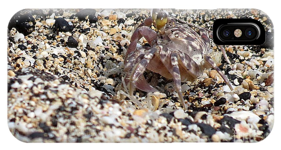 Crab IPhone X Case featuring the photograph Just Taking A Walk by Elizabeth Harshman