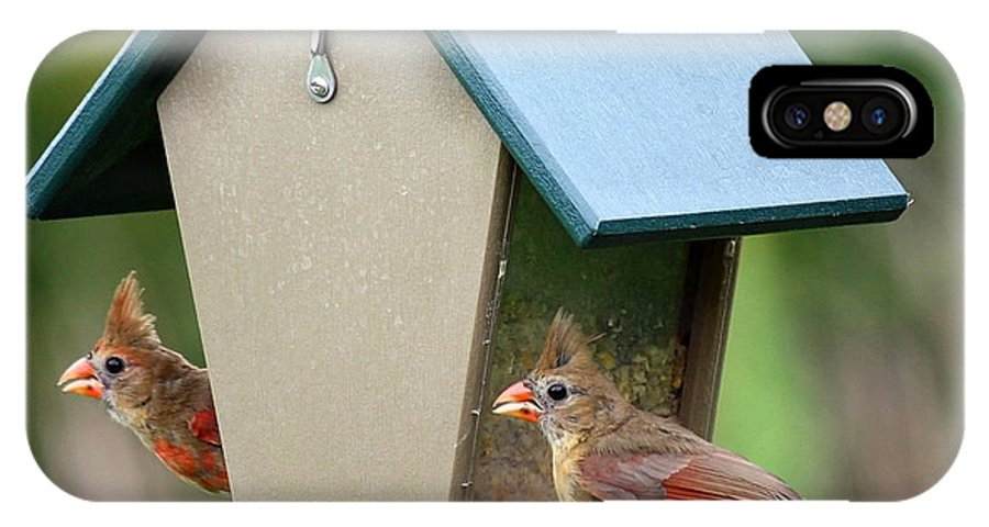 Cardinals IPhone X Case featuring the photograph Juvenile Cardinals On Feeder by Carol Groenen