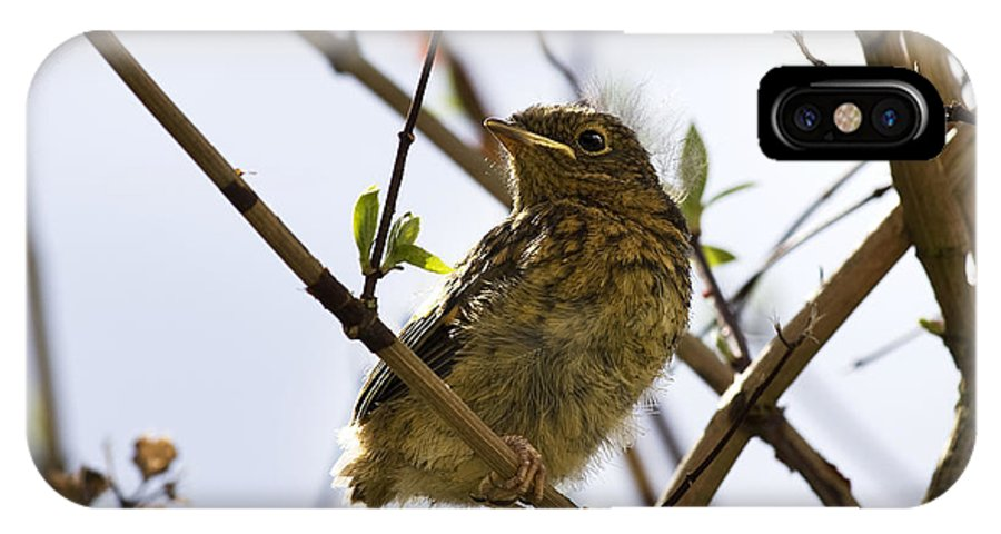 Alone IPhone X Case featuring the photograph Juvenile Robin by Jane Rix