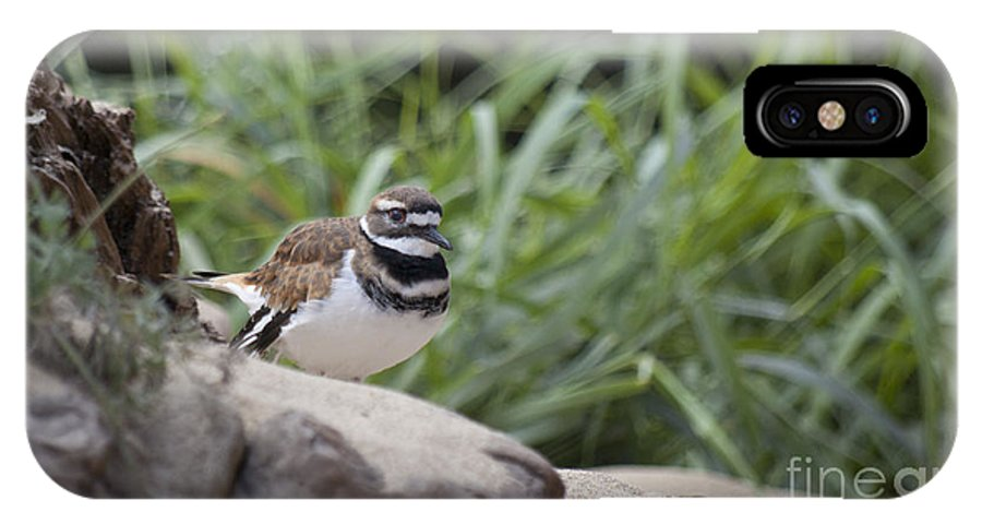 Beach IPhone X Case featuring the photograph Kildeer by Jim And Emily Bush