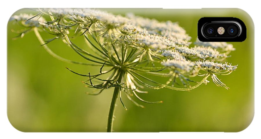 Queen Annes Lace IPhone X Case featuring the photograph Lacy White Flower by JD Grimes