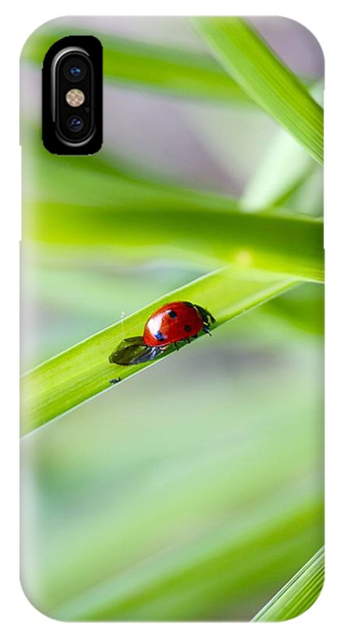 Animals IPhone X Case featuring the photograph Lady Bug by Jennifer Lamanca Kaufman