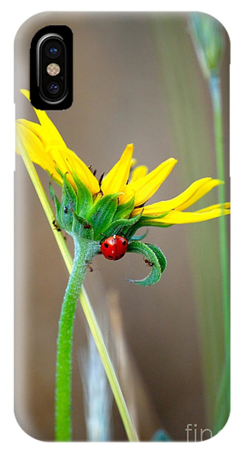 Sunflower IPhone X Case featuring the photograph Lady In The Sun by Anjanette Douglas