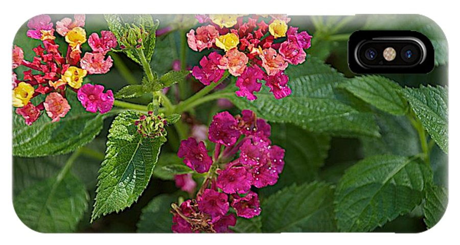 Flower IPhone X Case featuring the photograph Lantana by Joseph Yarbrough