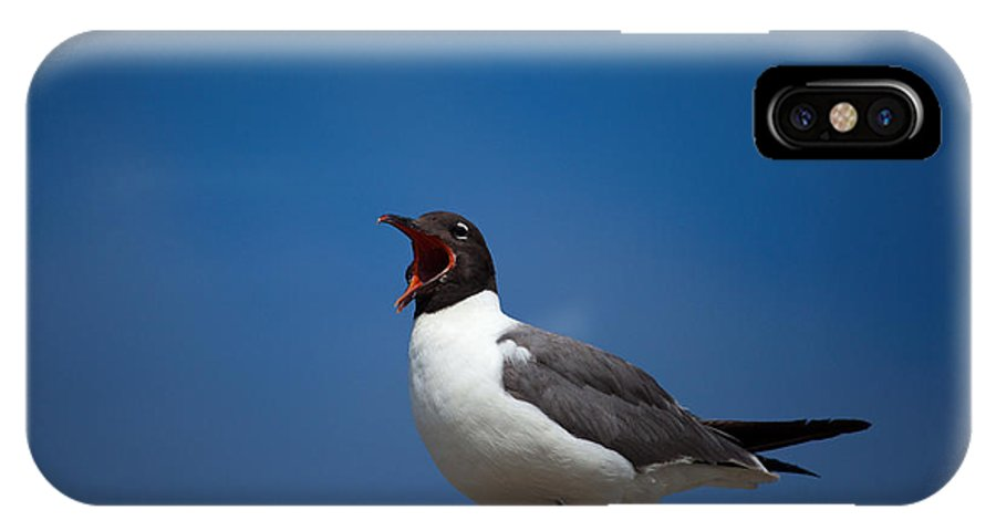 Gull IPhone X Case featuring the photograph Laughing Gull by Karol Livote