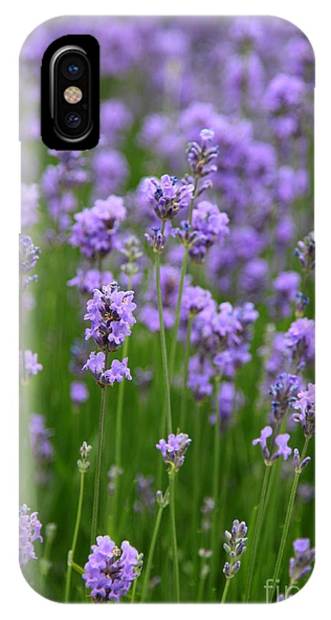 Lavender IPhone X Case featuring the photograph Lavender by Milena Boeva