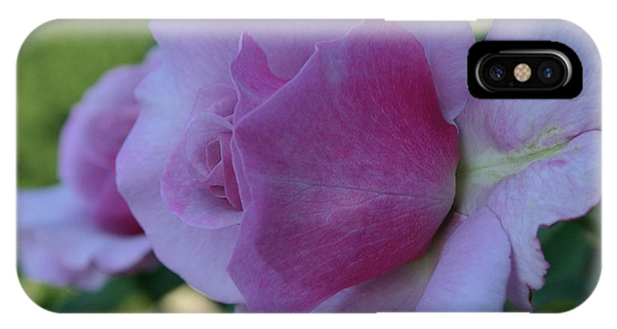 Outdoors IPhone X Case featuring the photograph Lavender Roses by Susan Herber