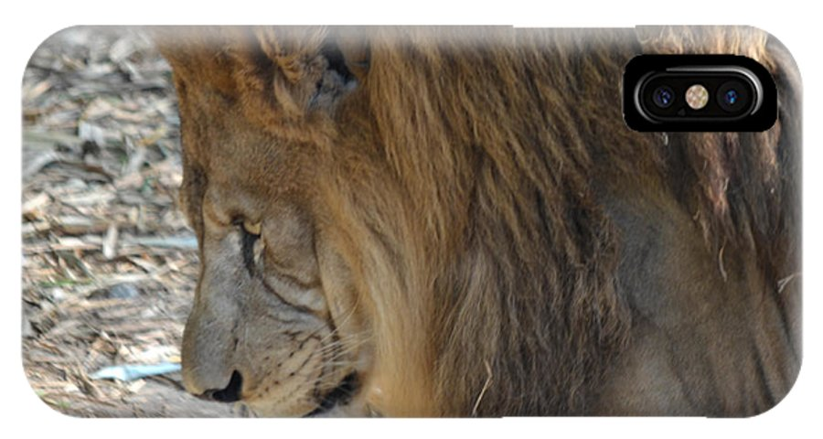 Lion IPhone X Case featuring the photograph Le Lion by Maggy Marsh