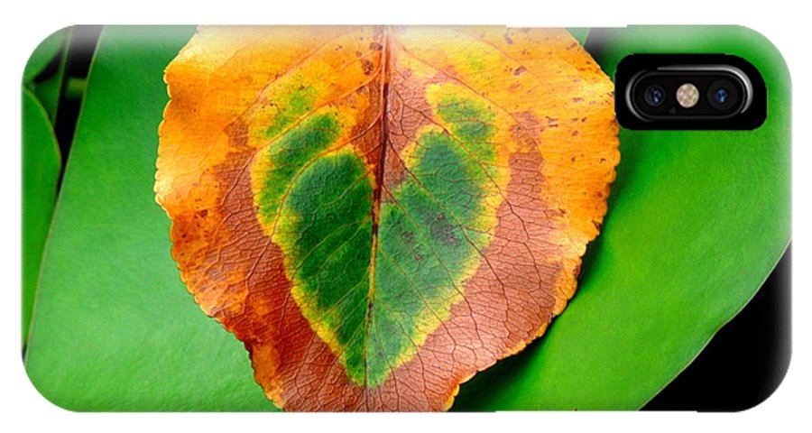 Leaf IPhone X Case featuring the photograph Leaf Leaf Heart Love by Renee Trenholm