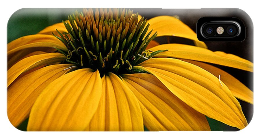 Outdoors IPhone X Case featuring the photograph Leilani by Susan Herber