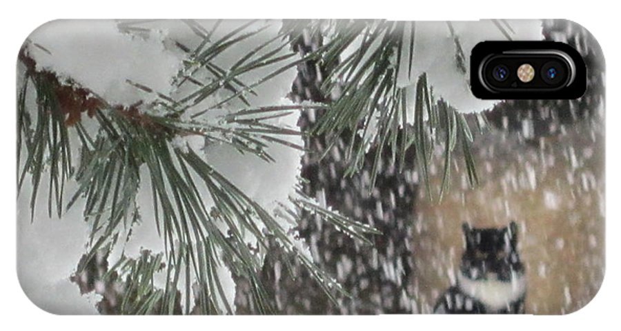 Snow Storm IPhone X / XS Case featuring the photograph Leo In The Snow Storm by Jeffrey Koss