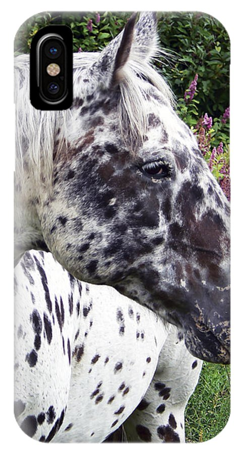 Horse IPhone X Case featuring the photograph Leopard Of The Pacific by Pamela Patch