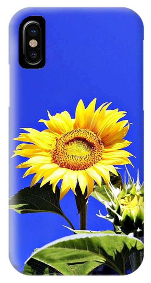 Sunflower IPhone X Case featuring the photograph Let The Sun Shine In by Erin Rosenblum