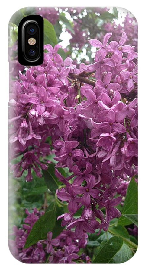 Lavender Blooms IPhone X Case featuring the photograph Lilac by Joseph Yarbrough