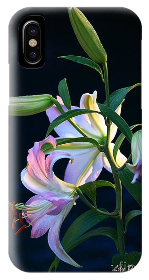 Lily IPhone X / XS Case featuring the photograph Lily Pod To Flower by Patrick Witz