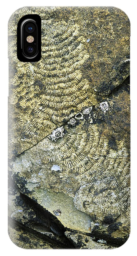 Patella Vulgata IPhone X / XS Case featuring the photograph Limpet Trails by Adrian Bicker