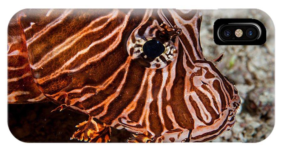 Belize IPhone X Case featuring the photograph Lionfish Portrait by Jean Noren