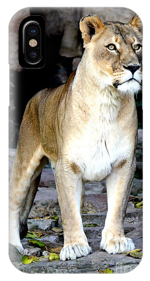 Lioness IPhone X Case featuring the photograph Lioness At Attention by Kathy White