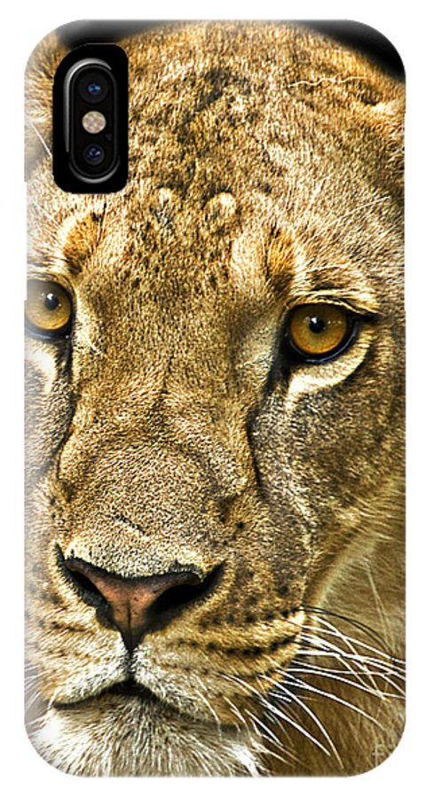 Lioness IPhone X / XS Case featuring the photograph Lioness by Charuhas Images