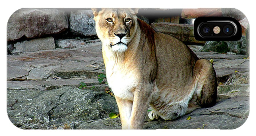 Lioness IPhone X Case featuring the photograph Lioness by Kathy White
