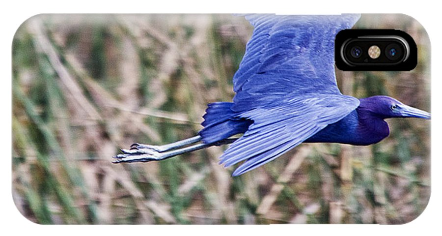 Little Blue Heron IPhone X Case featuring the photograph Little Blue Heron In Flight by Roger Wedegis