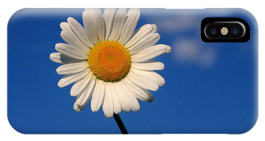 Daisy IPhone X Case featuring the photograph Lone Daisy by Cindy Haggerty