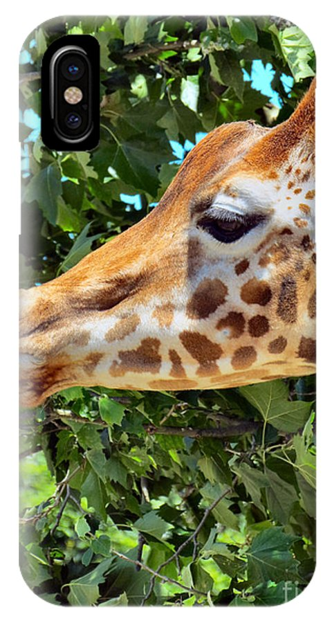 Giraffe IPhone X Case featuring the photograph Long Profile by Art Dingo