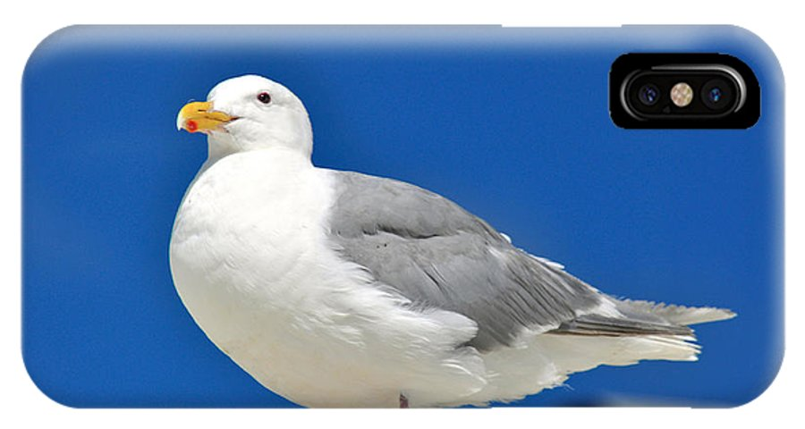 Seagulls IPhone X Case featuring the photograph Look Out by Debra Miller
