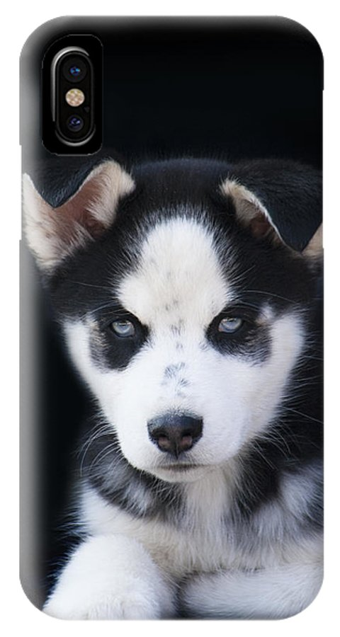 Lop Eared IPhone X Case featuring the photograph Lop Eared Siberian Husky Puppy by Kathy Clark