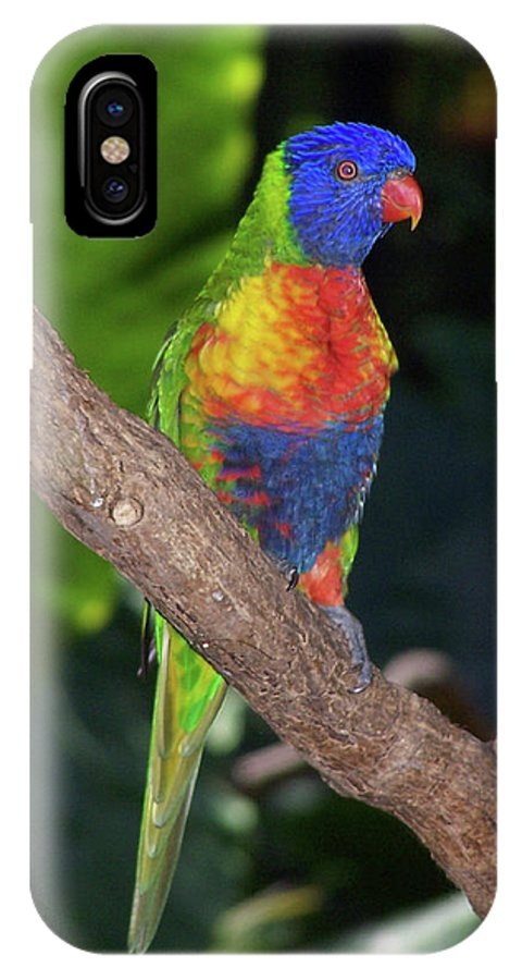 Australia IPhone X Case featuring the photograph Lorikeet by S Paul Sahm