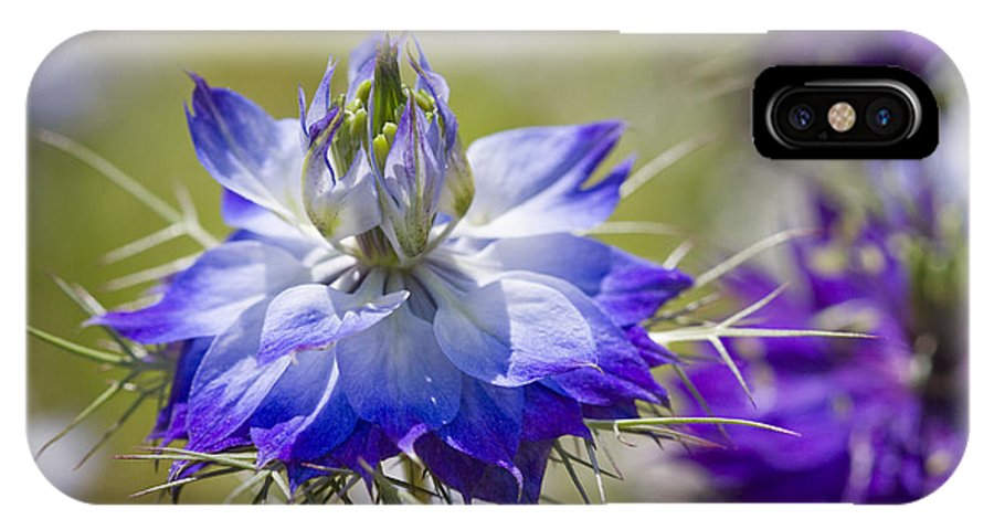 Nigella IPhone X / XS Case featuring the photograph Love In The Mist - Nigella by Kathy Clark